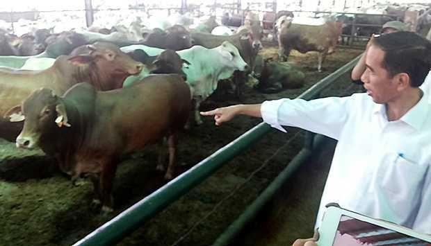Jokowi beri seekor sapi