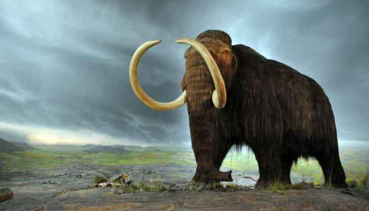 jenis hewan purba gajah mamot
