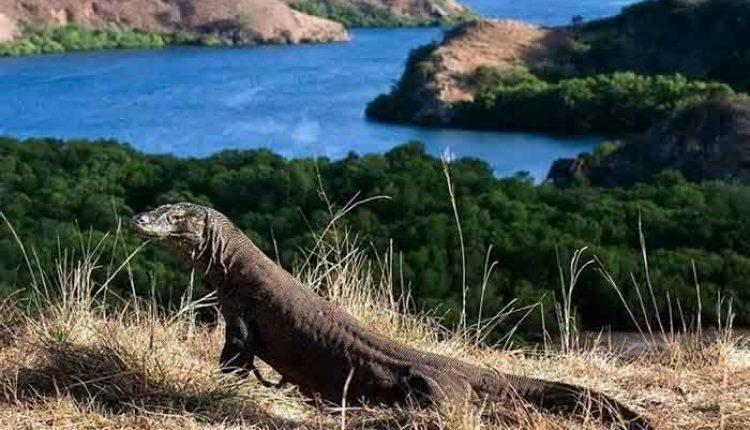 Taman nasional komodo 10 Wisata Favorit Dunia